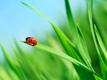 What the Origin of the Word 'Ladybug' Has to Do with Christianity