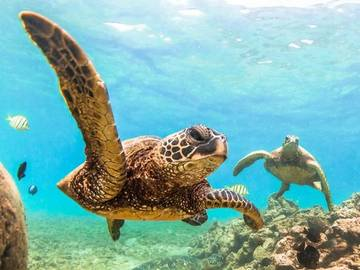 Where Does the Word 'Turtle' Come From? | Merriam-Webster