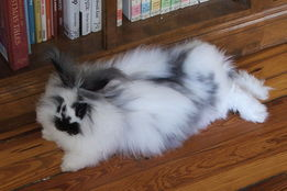 a-perfect-fluffy-bunny
