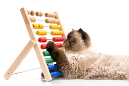 cat-using-abacus-for-arithmetic