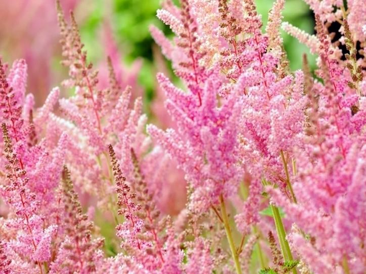 10 Flower Names Merriam Webster
