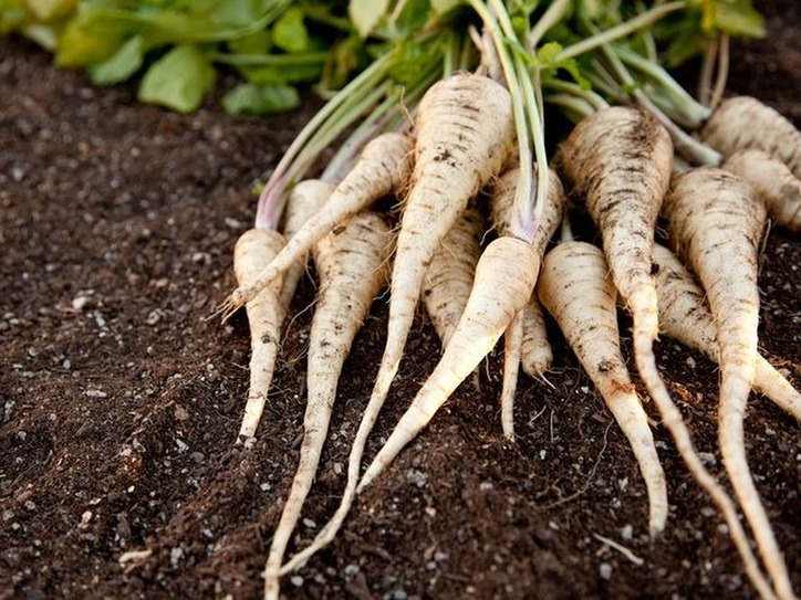 Ten Words from the Harvest : Parsnip