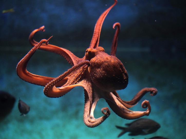 Sea Creature Words | Merriam-Webster