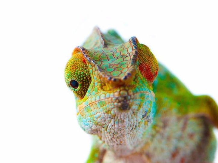 Lounge lizard - The Human Animal: Beastly Names for People | Merriam