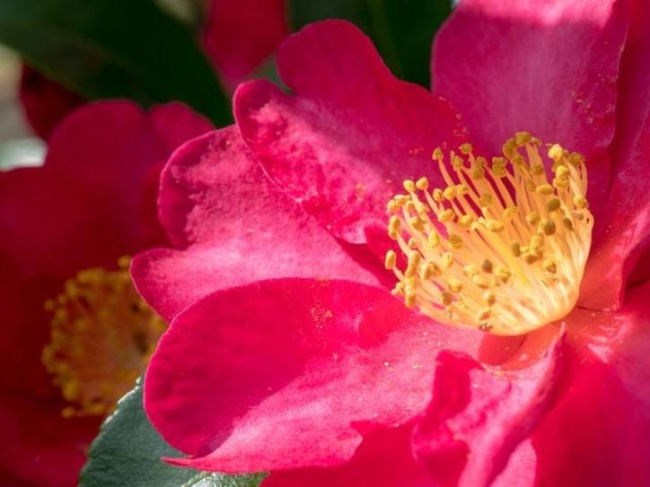 Greek Word For Flowery - Flowers Healthy