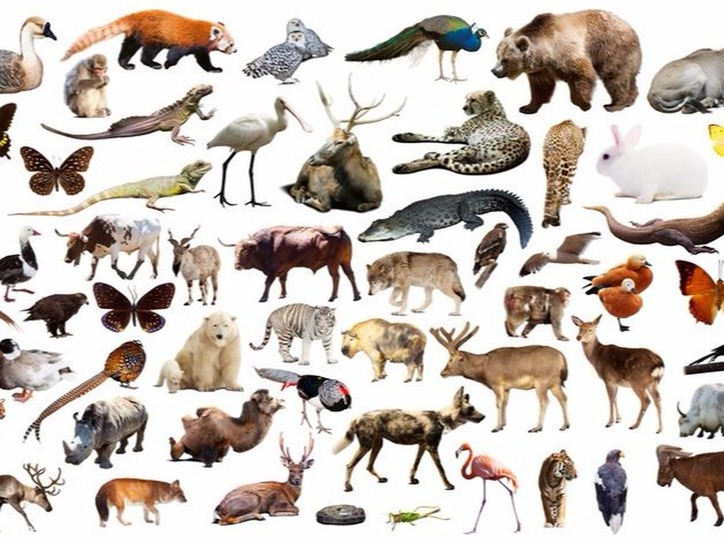 The Human Animal: Beastly Names for People | Merriam-Webster