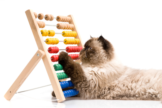 cat-using-abacus-for-arithmetic 6de00e077b0