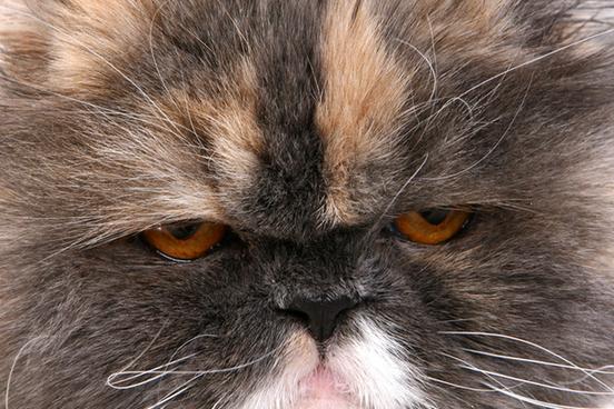 [Image: grumpy-cat-3250-44f629139eb961ec2a86297360572fa7@1x.jpg]
