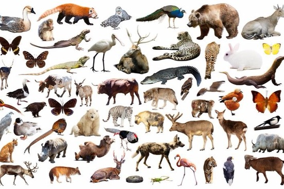 Biologically Of Course Human Beings Are Animals The Definition Uses Term Mammal Vertebrate