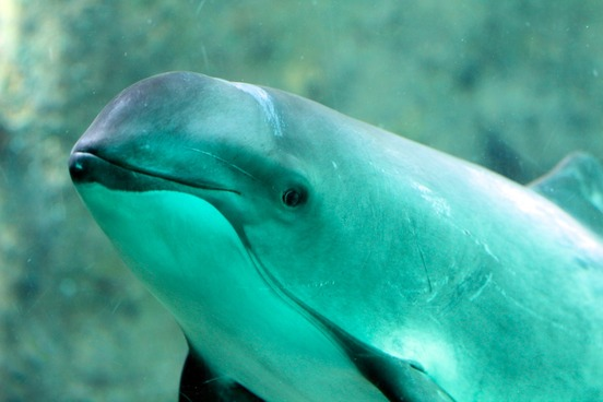 Sea Creature Words   Merriam-Webster