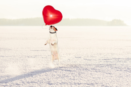 a-dog-in-snow-jumping-to-grab-a-heart-shaped-balloon-the-snow-and-heart-balloon-indicate-that-the-month-being-represented-is-april-and-the-dog-is-just-kinda-cute