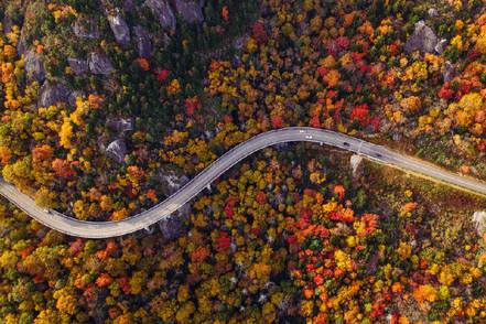 a-top-down-image-of-road-through-an-autumn-forest