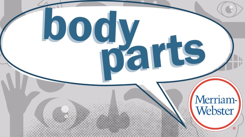 Body Parts That Are Also Verbs (Video) | Merriam-Webster