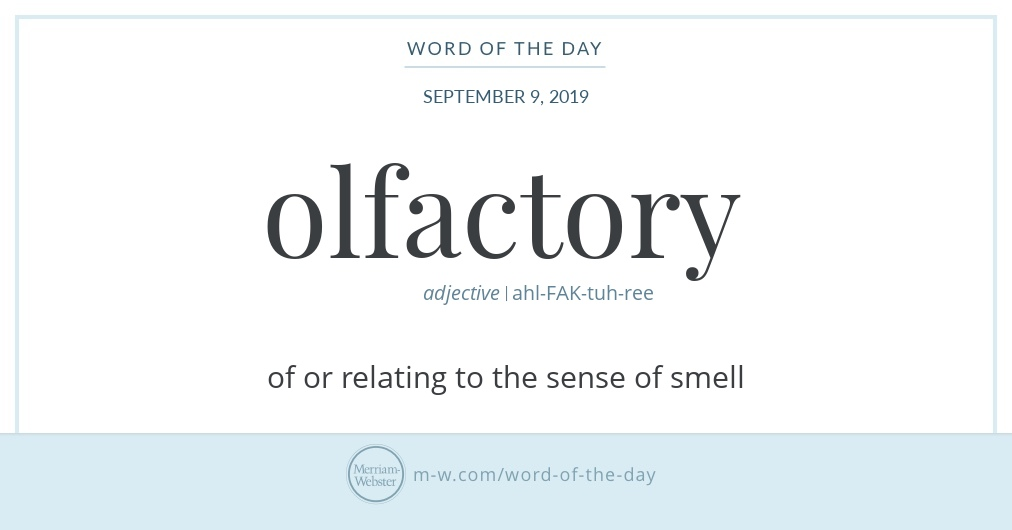 Word of the Day: Olfactory | Merriam-Webster